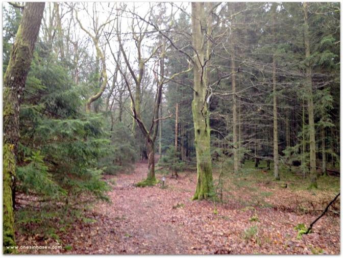 Pelo bosque afora